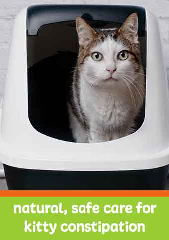 natural constipation relief for cats