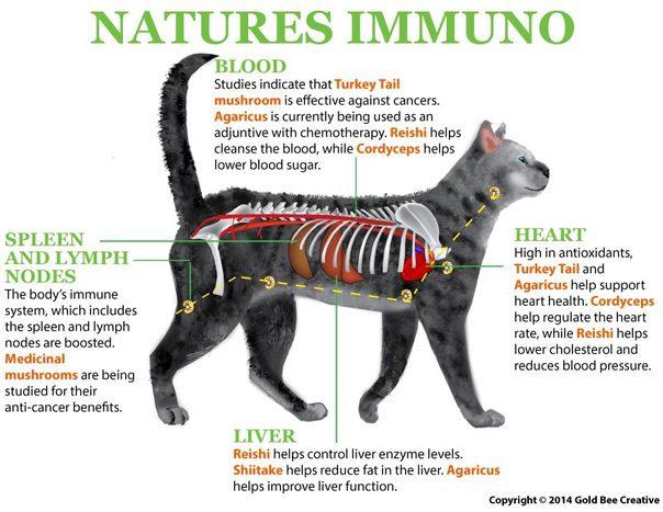 natures-immuno-cat-illustration-benefits.jpg