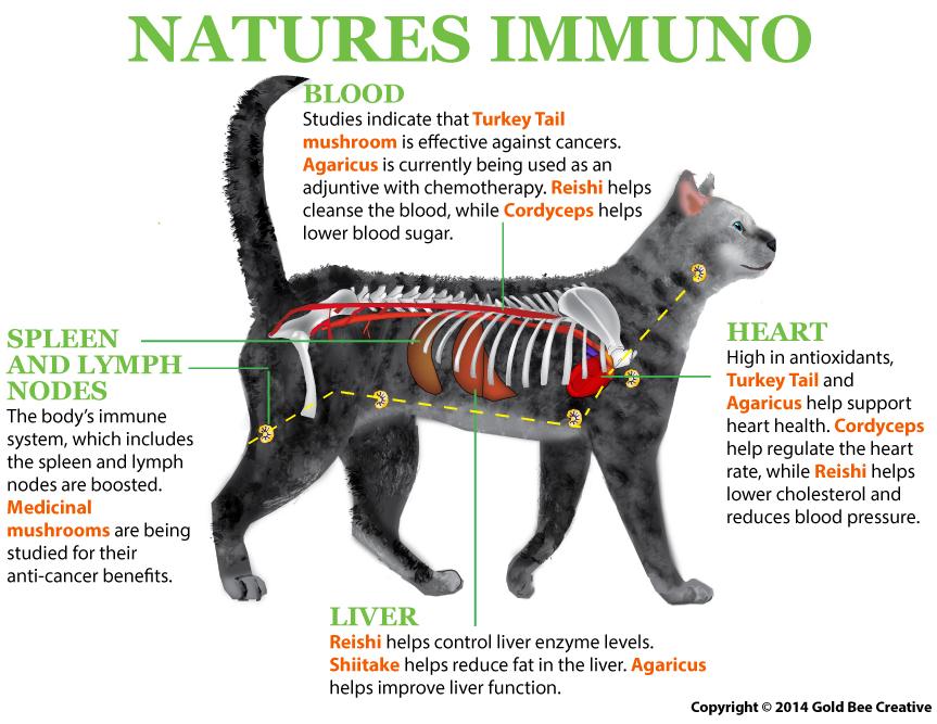 How Medicinal Mushroom Help Cats