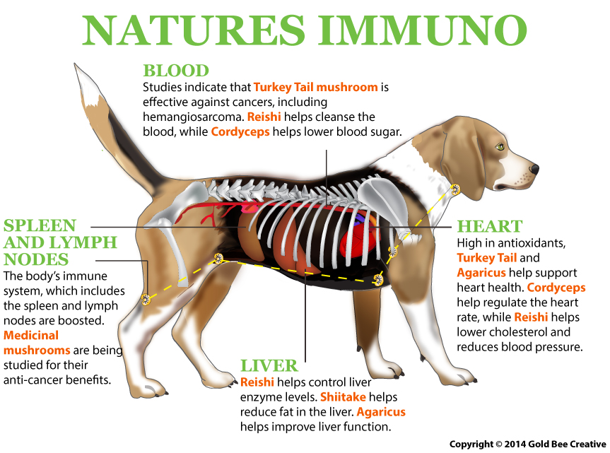 natures-immuno-mushroom-blend-pets-dogs.jpg