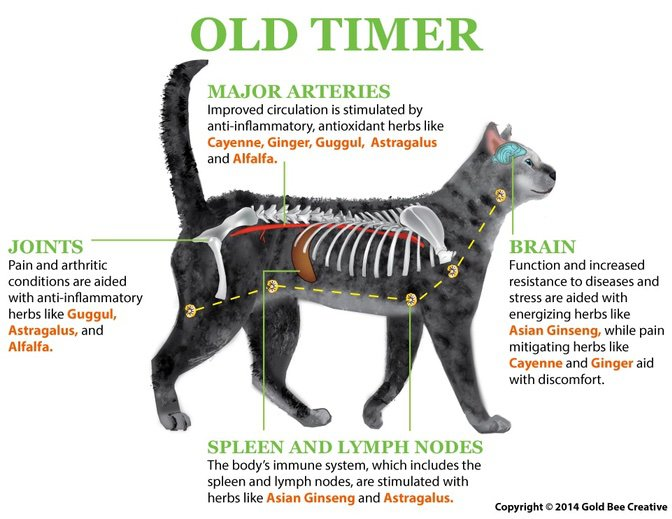 old-timer-cat-diagram.jpg