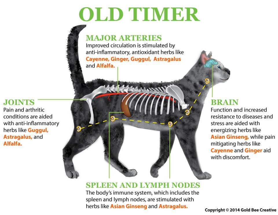 old timer cat illustration