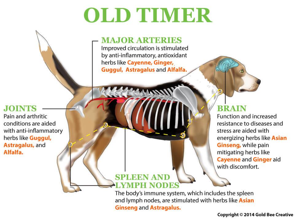 old timer dog illustration