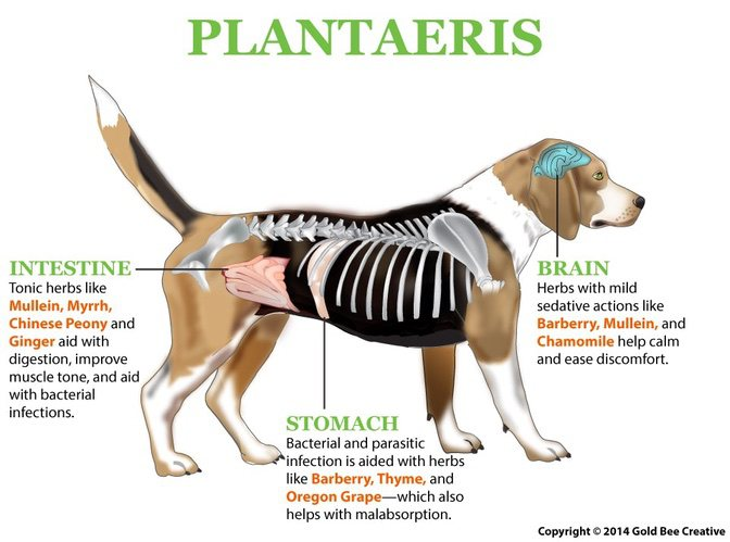 plantaeris-dog-diagram-op.jpg