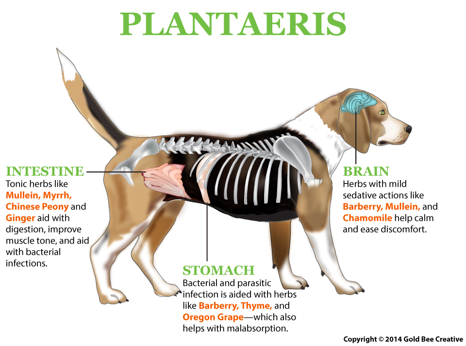 plantaeris dog illustration