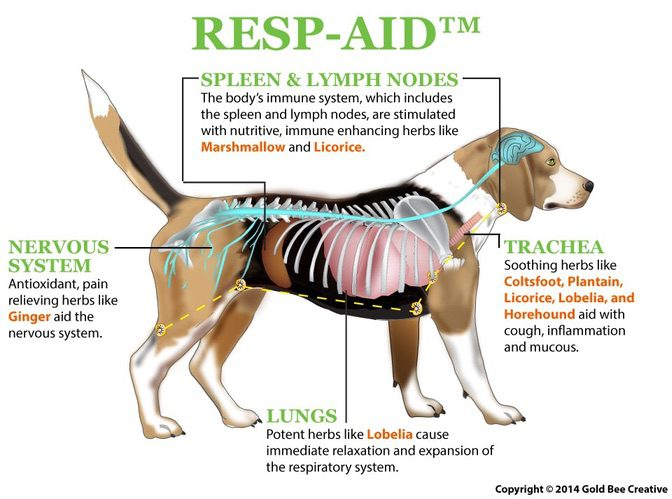 Resp Aid For Dog Respiratory Infection