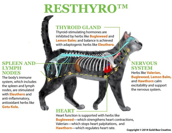Resthyro for cats