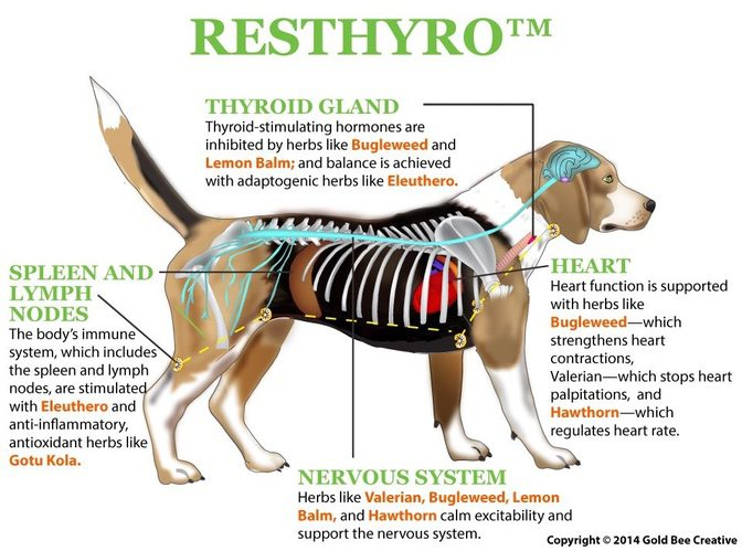 Resthyro for dog thyroid support