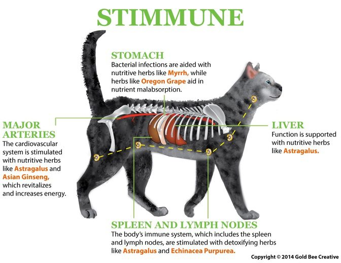 Stimmune For Cat Allergy Relief Feline Immune Support