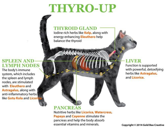 Thyro Up For Hypothyroidism In Cats
