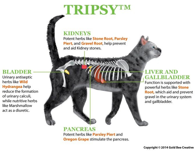 Tripsy for cats