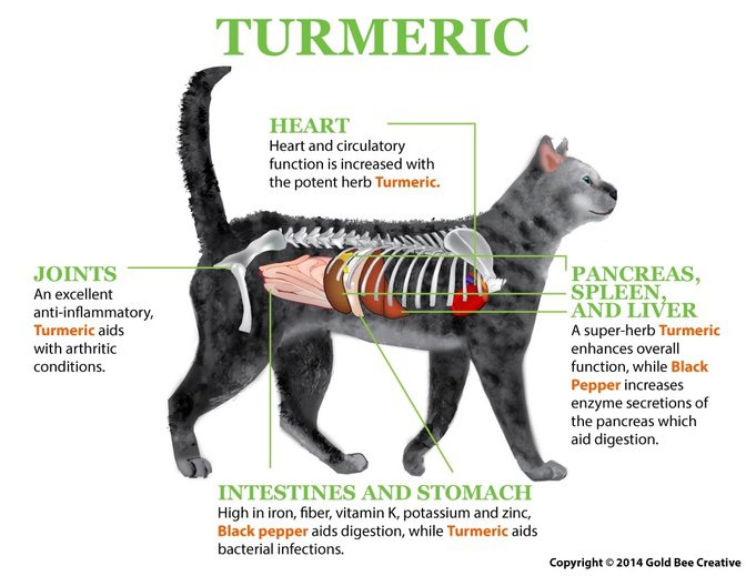 Turmeric for cats
