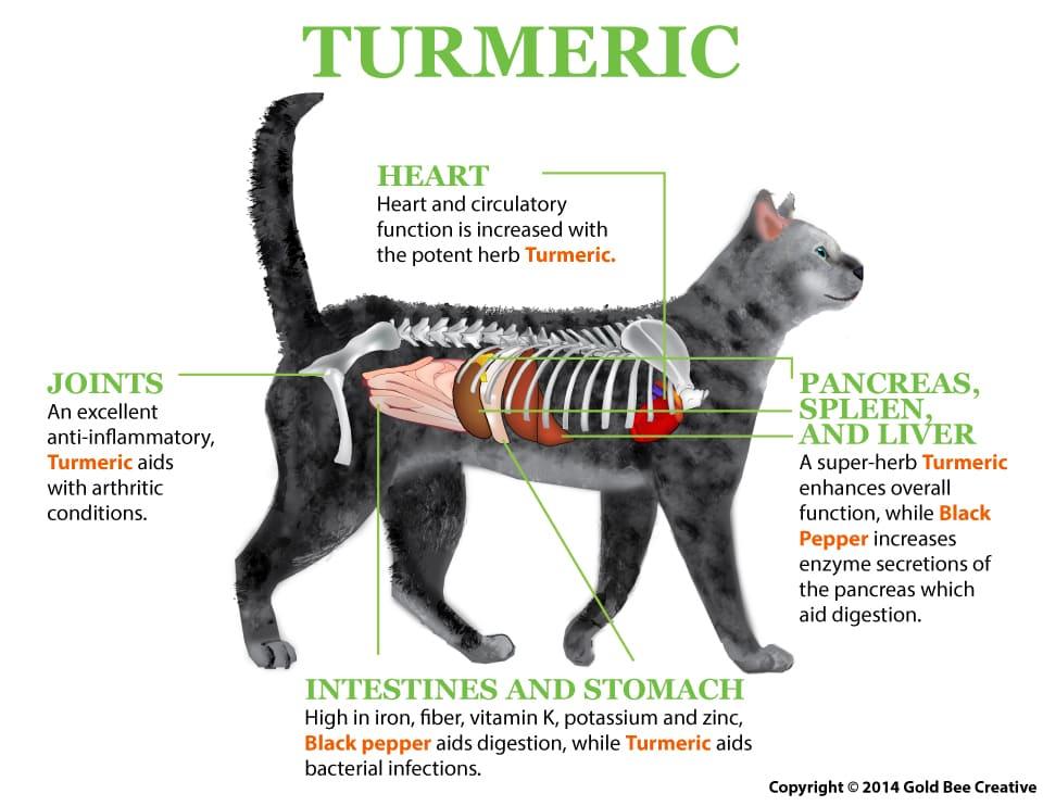Turmeric Cat fuctioning