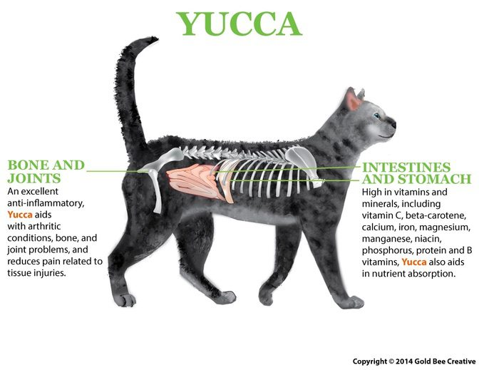 Yucca for cats