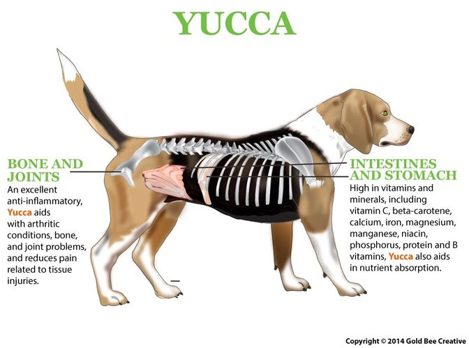 yucca-dog-diagram-op.jpg