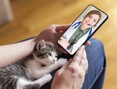 FREE 15-MINUTE ONLINE VIDEO CHAT