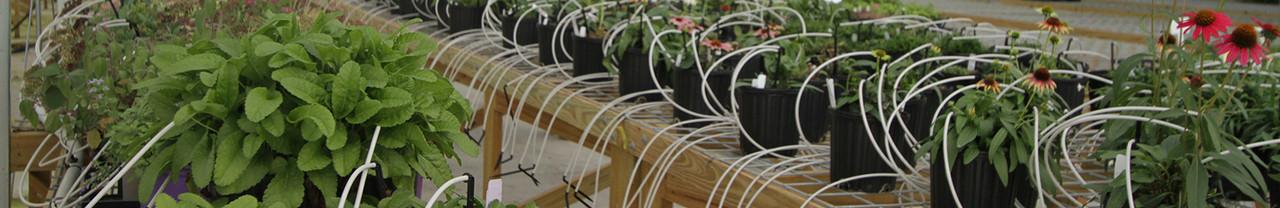 Patented Plants