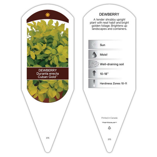 Duranta erecta Cuban Gold  1 Tag