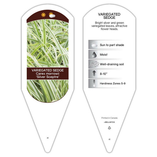 Carex morrowii Silver Sceptre  1 Tag