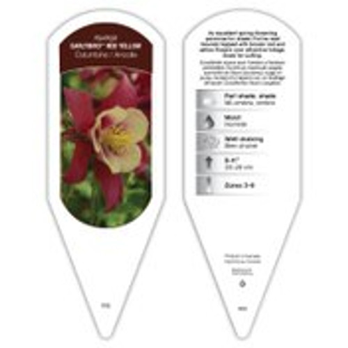 Aquilegia Earlybird™ Red Yellow 1 Tag