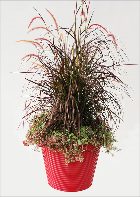 5 Considerations for Using Grasses in Combinations