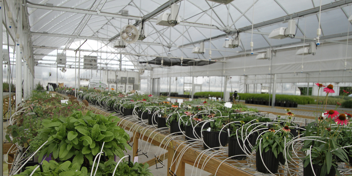 ecg-greenhouse-20.jpg