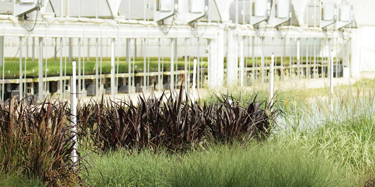 ecg-greenhouse-grasses.jpg