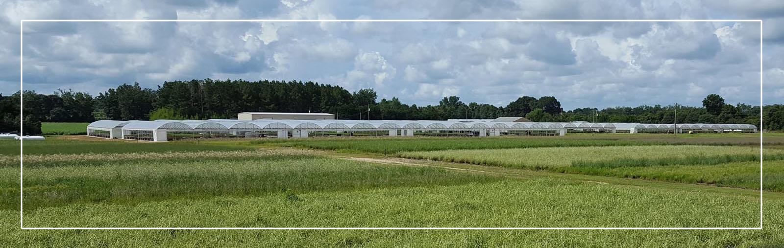 greenhouses-farm-3.jpg