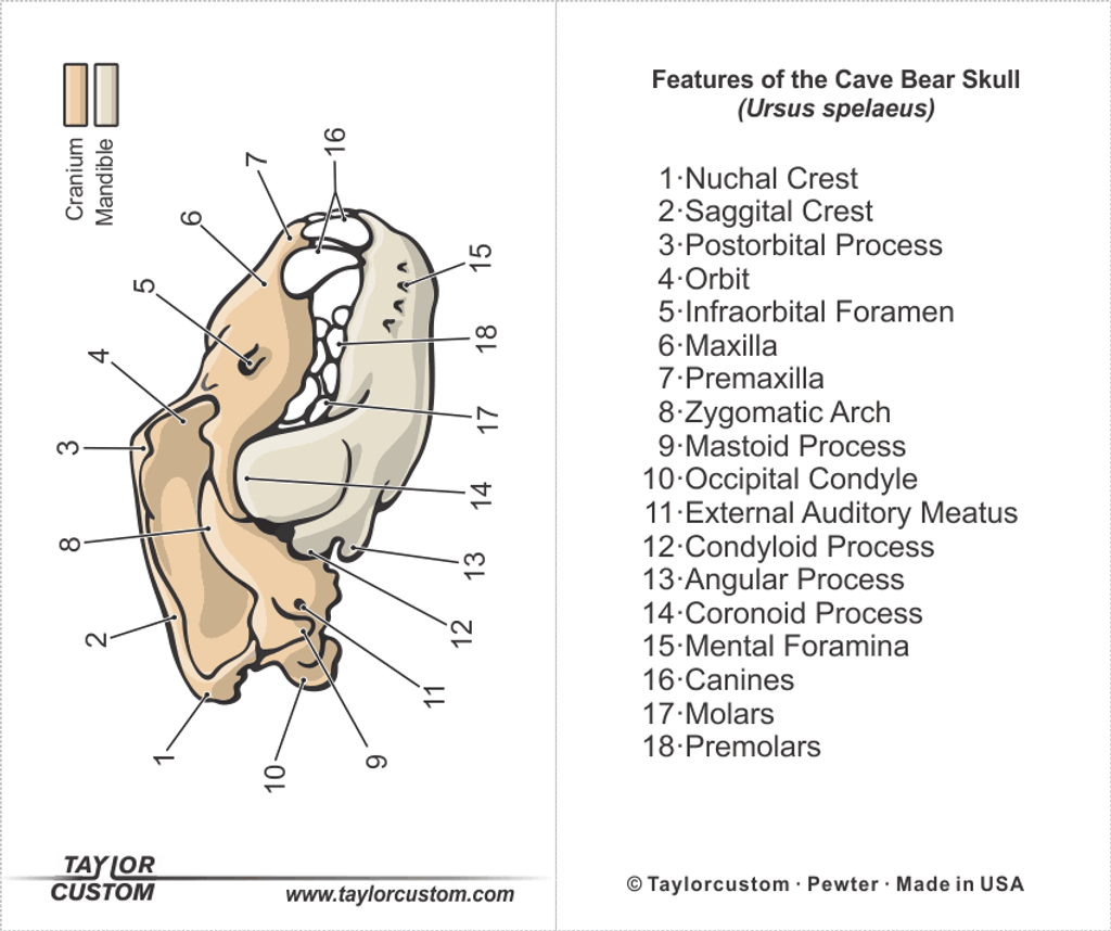 cave bear skull keychain packaging
