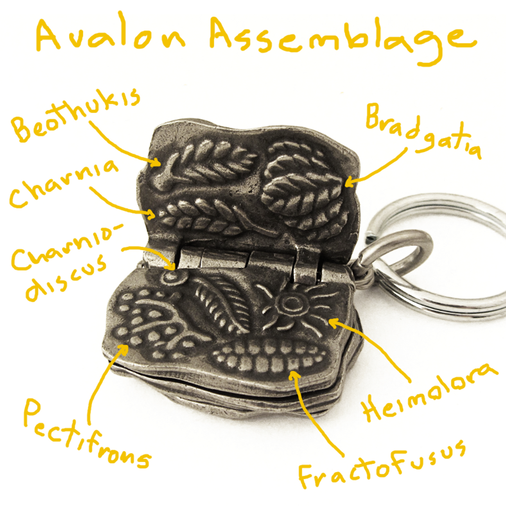 Rdiacaran Biota Keychain Avalon Assemblage with notes