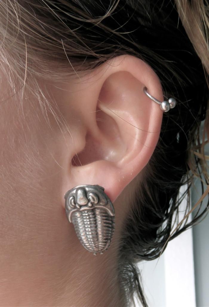 trilobite earrings