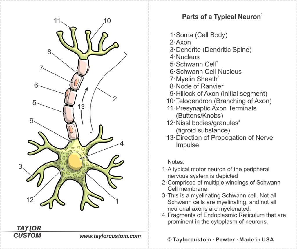 Neuron Earrings Packaging