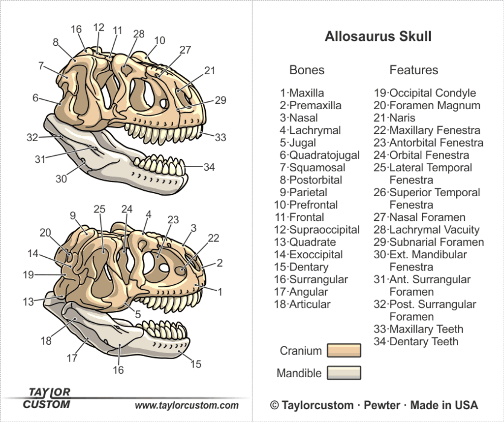 Allosaurus Magnifier Pendant packaging illustration