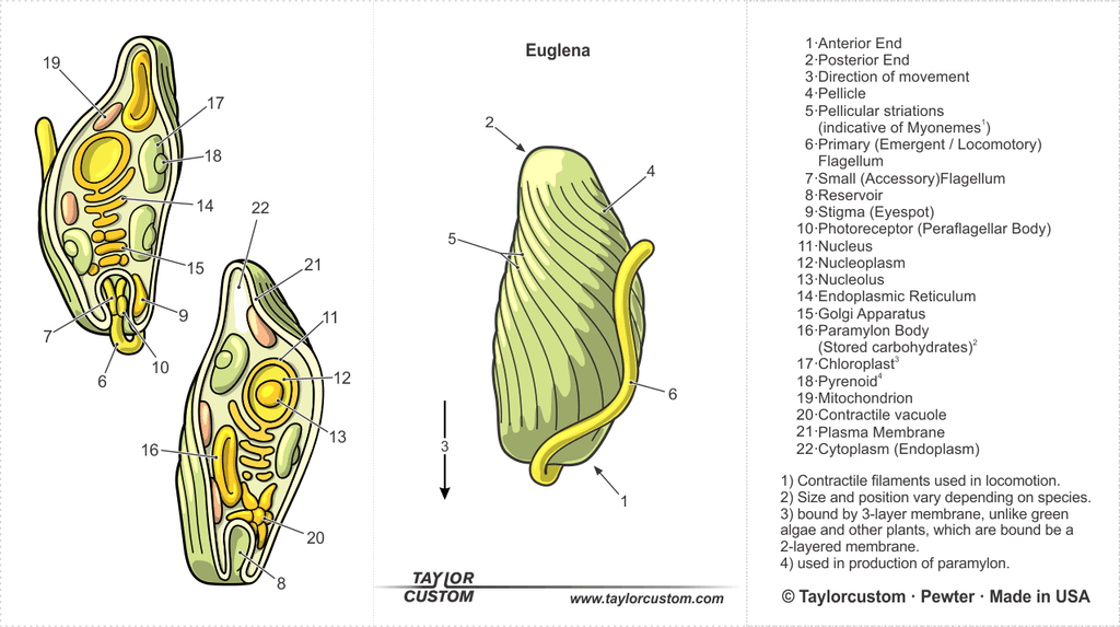 euglena necklace packaging