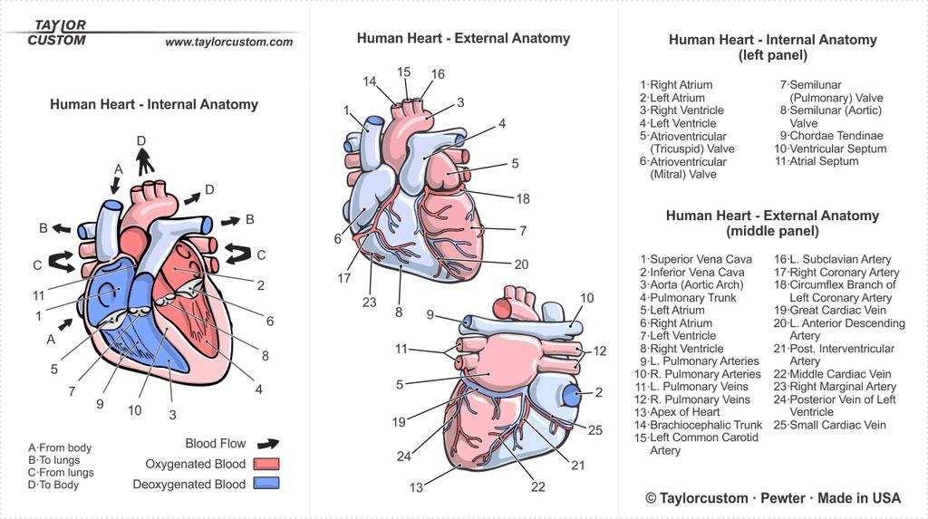 Anatomical Heart Locket packaging