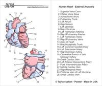 Human Heart Anatomy Pendant Packaging