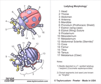 ladybug pendant packaging diagram