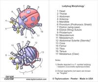 ladybug pendant packaging diagram