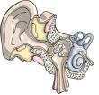 mini-ear.png