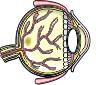 mini-eye-02.png