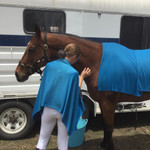 2 EQUICOOL EQUESTRIAN SYSTEM - 2 Giant towels for WB+