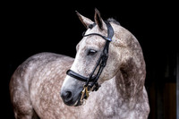 PSOS - Bridle Double Paragon Revolution -  by PS of Sweden