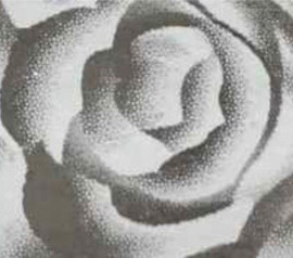 Rose Silver Pattern - Flex Foil Vinyl Sheet/Roll HTV
