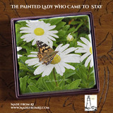 The Painted Lady Who Came To Stay