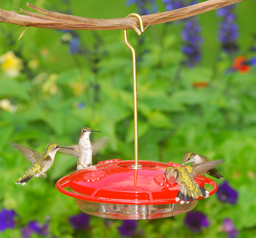 Bird Feeder - Aspects Hummingbird- Ultra