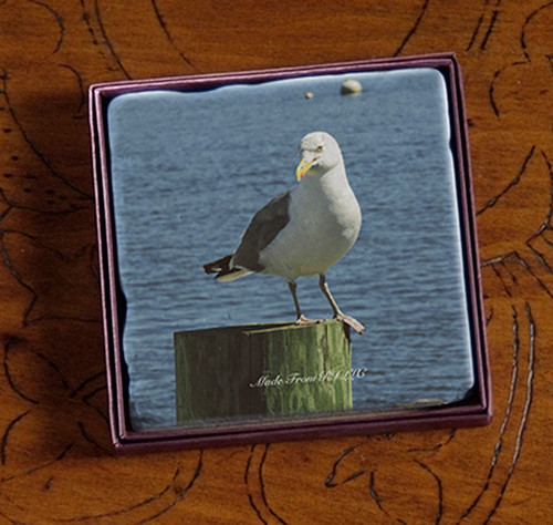 Coaster - Impatient Gull on Spile Wickford