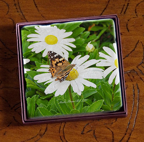 Coaster - Painted Lady on Daisies