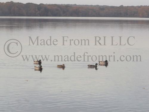 Duck Flotilla Of Fall