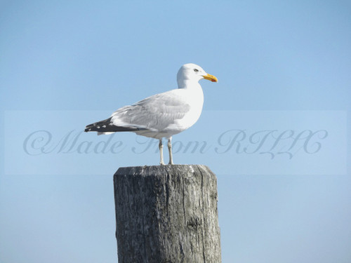 Gull On Top Of The World