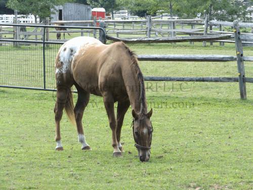 SC Horse